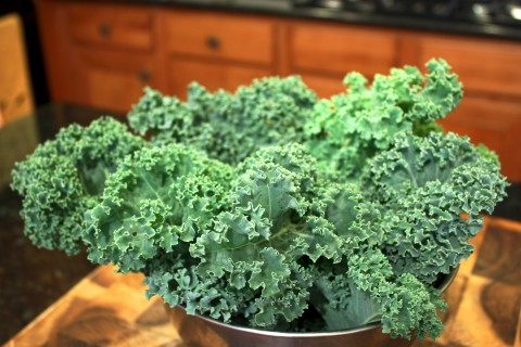 Kale from last spring