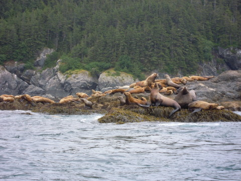 Sea lion haul out spot.